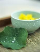 Nasturtium leaf and bowl with dahlia