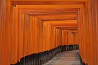 Torii Gates,Fushimi Inari Taisha,Fushimi