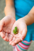 Close-up of Young Girls's Hands holdingSmall Frog
