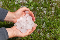 Man Holding Large Hailstones