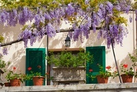 Window and Flowerpots, Spoleto, Umbria,Italy