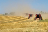 Spring Wheat Being Harvested, South-Western Alberta, Canada