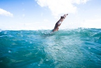 Woman Diving in Ocean