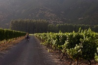 Woman Riding Bicycle in Vineyard