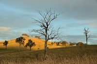 Countryside near Dungog, New South Wales, Australia