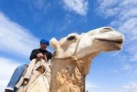 Camel Driver on Arabian Camel, Essaouira, Morocco