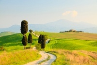 Cypress Trees and Dirt Road, Pienza, Val d'Orcia, Tuscany, I