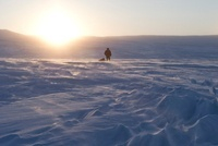 Adventurer Pulling Sled at Sunset, Banks Island, Northwest T