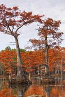 Bald Cypress Swamp in Autumn, Caddo Lake, Louisiana, USA