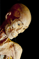 Portrait of Plastinated Human