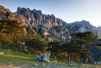 Aiguilles de Bavella (Bavella Needles) and pine trees on the 1,218 m Col de Bavella (Bavella pass), Corsica, France