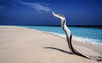 Twisted Driftwood on Tropical Beach with Turquoise Water, Maldives, Indian Ocean