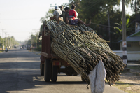 Truck load of Bamboo on the road to Mawlamyine, Myanmar