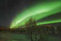 Polar light and birches on Senja - Europe, Norway, Troms Fylke, Senja, Stoennesbotn - Night