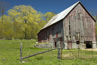 Old barn with trees in spring foliage, near Milford, Prince Edward County Ontario Canada
