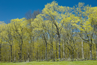 Trees on edge of farm field in spring, near Milford, Prince Edward County, Ontario Canada