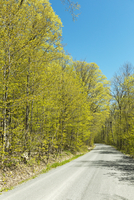 Tree-lined country road through forest in spring, near Milford, Prince Edward County, Ontario, Canada