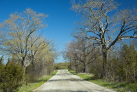 Budding trees lining country road in spring, near Milford, Prince Edward County, Ontario, Canada
