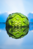 whole artichoke half submerged in water with blue cloud reflections in background