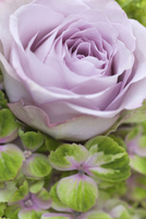 Close-up of hydrangea and rose bouquet