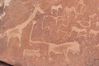 Close-up of Petroglyphs (or rock engravings), Twyfelfontein, UNESCO World Heritage site, Damaraland, Kunene Region, Namibia, Afr
