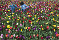 Young Girls in Tulip Field in Spring, Oregon, USA