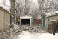 Backyard and trees showing ice storm damage in Toronto, Ontario, Canada