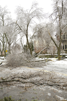 Fallen trees from ice storm damage on city street, Toronto, Ontario, Canada