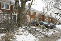 Houses on city street showing ice storm damage, Toronto, Ontario, Canada