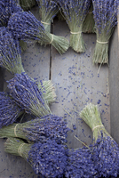 Overhead View of Bunches of Lavender, Provence, France