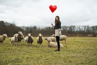 Young Woman with Heart-shaped Balloon by Sheep in Field, Mannheim, Baden-Wurttemberg, Germany