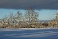 Shadows on Snow Covered Field and Snowy Trees on Farm near Madoc, Ontario, Canada