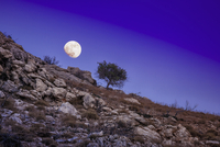 Scenic view of tree on rocky hillside with moon in night sky, Matala, Crete, Greece.