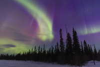 Northern Lights (Aurora Borealis) illumintaing Night Sky above Fir Forest, Pyha-Luosto National Park, Lapland, Finland