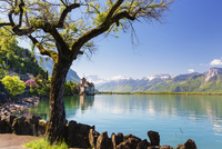 Chateau de Chillon on Lac Leman in Spring with Dents du Midi in the background, Vaud, Switzerland