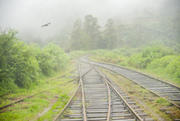 View from Panorma Train Window of Train Tracks and Bird Flying into Fog, on Route from Ella to Kandy, Sri Lanka,