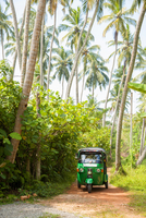 Man Driving Green Tuk Tuk along small Path with Palm Trees, Bentota, Sri Lanka