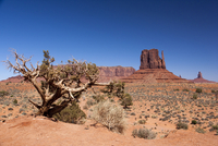 Scenic landscape with Mitten Butte in the background, Monument Valley, Arizona, USA