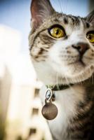 Close-up portrait of Cat 20025321643| 写真素材・ストックフォト・画像・イラスト素材|アマナイメージズ