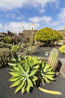 Jardin de Cactus, a garden with a wide range of various cacti from all over the world, Guatiza, Lanzarote, Las Palmas, Canary Is