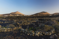 Volcanoes behind a field of walls of lava rocks that give grapevine shelter for the heavy winds, La Geria, Lanzarote, Las Palmas
