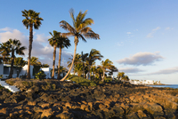 Palm trees on the beach at sunset, Puerto del Carmen, Lanzarote, Las Palmas, Canary Islands