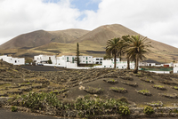 Vineyards with Stone Wall Protection by White Washed Village beneath Volcanic Mountains, Tiagua, Lanzarote, Canary Islands, Spai
