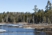 Beaver Pond with dam and lodge in late winter, Algonquin Park, Ontario, Canada
