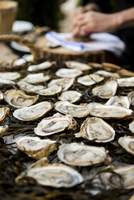 Close-up of Oysters with Person Shucking Oysters in the Background