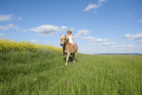 Young woman riding a Haflinger horse in a meadow in spring, Bavaria, Germany