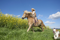 Young woman riding a Haflinger horse with in a Kooikerhondje dog running beside, spring, Bavaria, Germany