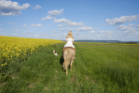 Back view of young woman riding a Haflinger horse in a meadow with Kooikerhondje dog walking beside, spring, Bavaria, Germany