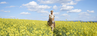 Young woman riding a Haflinger horse in a canola field in spring, Bavaria, Germany