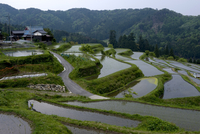 Flooded rice paddy terraces in early spring in mountain village of Hata, Takashima, Shiga, Japan, Asia 20025323273| 写真素材・ストックフォト・画像・イラスト素材|アマナイメージズ